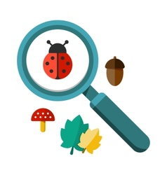 Ladybug and a magnifying glass vector