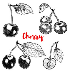set of hand drawn cherry on white background vector image vector image