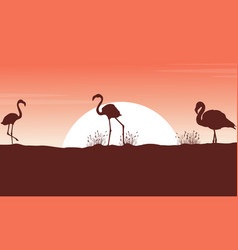 collection flamingo landscape silhouettes at vector image vector image