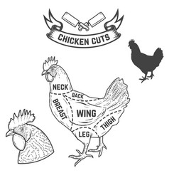 Chicken butcher diagram design element for poster vector