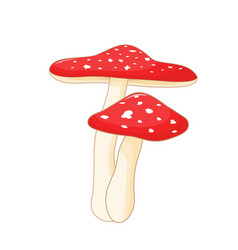 different mushrooms amanita of vector image