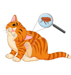 flea infested cat vector image