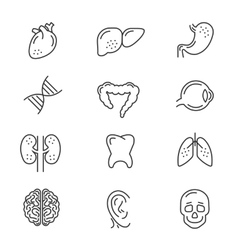 Human organs line icons vector image