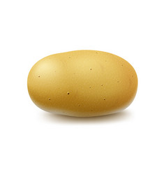 New yellow raw whole unpeeled potato isolated vector