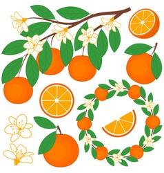 Oranges Set vector image