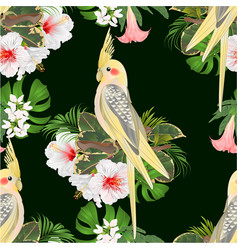seamless texture yellow cockatiel cute funny vector image