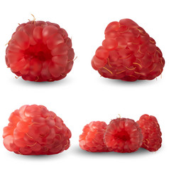 Set realistic raspberries from different angles vector