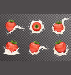 Strawberry milk cream curl splash drops fruit vector