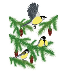 Tits on fir branches vector