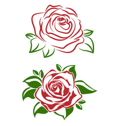 A red rose flower with green leaves vector