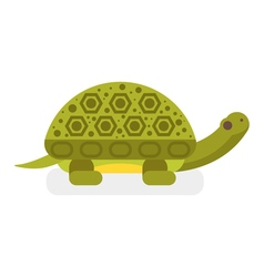 flat style of turtle vector image