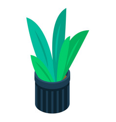 office plant pot icon isometric style vector image