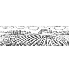 Vineyard plantation field rural scene sketch vector