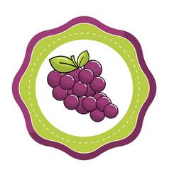 emblem sticker grapes fruit icon image vector image