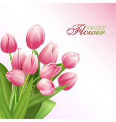 Beautiful flowers background with tulips vector image