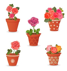 collection of rose planted in ceramic pots for vector image