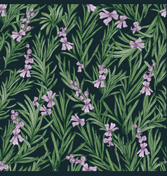 Floral seamless pattern with blooming rosemary on vector