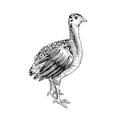 hand drawn turkey nestling vector image