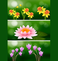 Three scenes with three different flowers vector