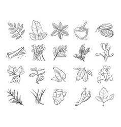 Vintage hand drawn herbs and spices sketch vector