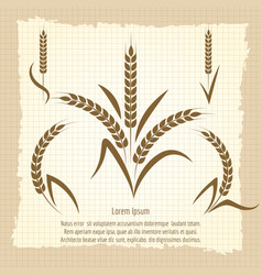 wheat branches vintage poster design vector image