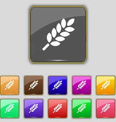 Wheat Ears Icon sign Set with eleven colored vector image