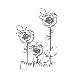 blurred silhouette sketch roses planted with vector image
