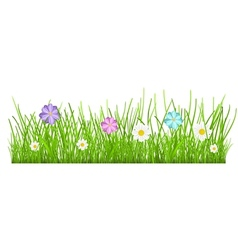 Grass and flowers vector image vector image