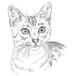 Egyptian mau cat vector
