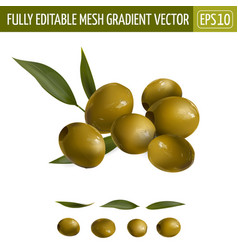 Green olives with leaves on a white background vector