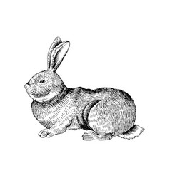 hand drawn rabbit vector image