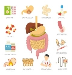 Digestive System Icons Set vector image