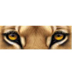 big eyes yellow eyes a lion close up vector image