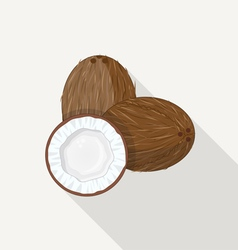 Coconut Flat Icon vector image