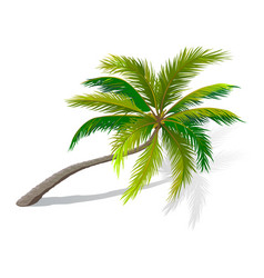 Curved palm tree vector