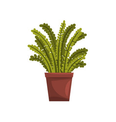 fern indoor house plant in brown pot element for vector image