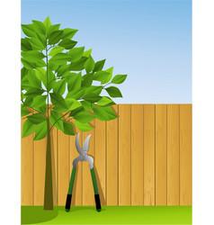Garden scissors vector