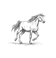 Horse sketch with running racehorse vector