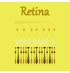 human icon in flat style structure retina vector image