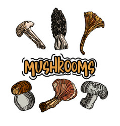 set of wild hand drawn mushrooms vector image