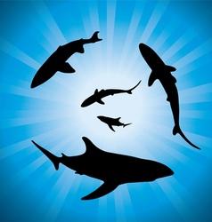 Sharks underwater vector