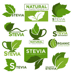 stevia sweetener sugar substitute healthy vector image