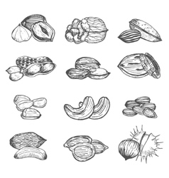 Nuts Set Hand Draw Sketch vector image vector image