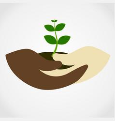 human hand holding green small tree vector image vector image