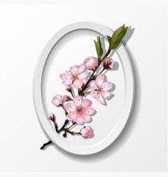 Branch of pink sakura cherry flowers in frame vector