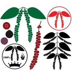 Black pepper vector image