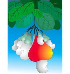 Cashew nut vector