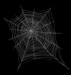 hand drawing decorative beautiful spider web vector image vector image
