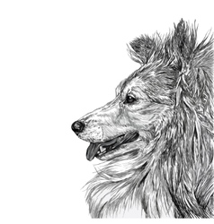 Sketch of siberian dog vector