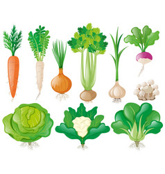 different types of vegetables vector image